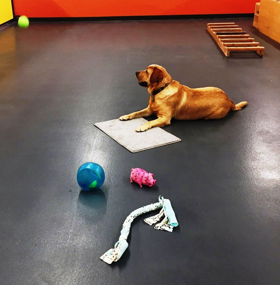 leave it, place with ball and toys